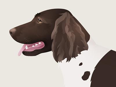 Wachtelhund dog vector illustration animal hunting dog illustrator photoshop