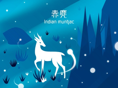 Mountains of Hong Kong - Indian muntjac 赤麂 (A01) deer invite invitation mack studio mack chan hong kong dribbble hk 香港 黃麂 赤麂 indian muntjac