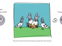 The life of a pigeon