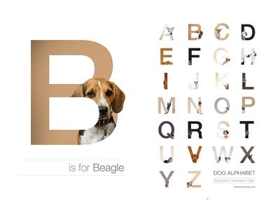 2nd Shot Dribbble typography desin breeds alphabet junobeagle juno dogalphabet