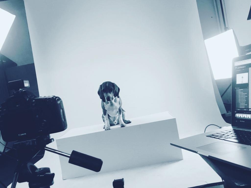 Juno photo session