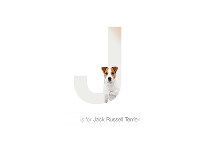 J - Jack Russell Terrier alphabet letter design hyper active breed dog jack russell terrier