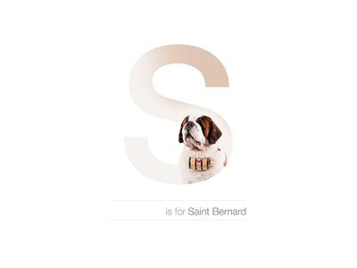 S - Saint Bernard andreiclompos dogalphabet letter s breed dog switzerland suisse swiss saint bernard