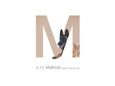 M - Malinois
