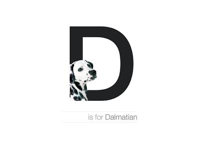 D - Dalmatian letter dogalphabet breed dog croatia dalmatian