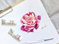 Pink peony flower watercolor