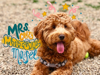 Mrs. Crazy Maisie!! stars drawing digital doodle dog puppy design typography procreate handlettering lettering