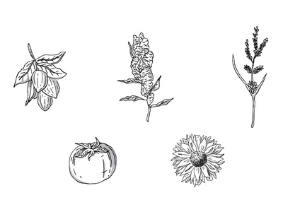 Curl Category Ingredient Illustrations