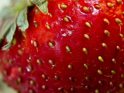 Strawberry Macro ballardstudio strawberry macro project-365 photography