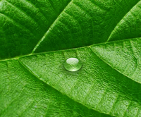 A Leaf and A drop.