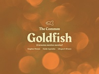 The Common Goldfish