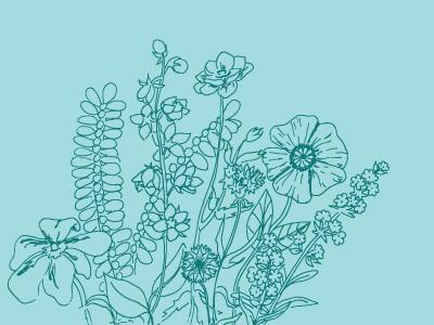 Wildflowers nature flower illustration