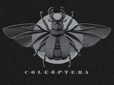 Coleoptera (detail) vector noblanco coleoptera beetle cotton bureau illustration black lines scarab