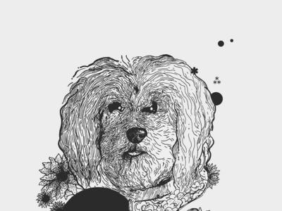 Ari Standar: Mayor of Angelenos' Dogs