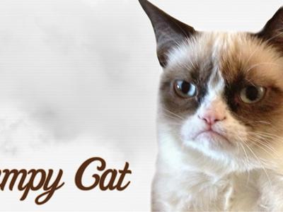 Grumpy Cat HD Wallpaper