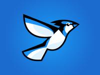 BluJay - Logo Concept