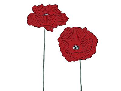 Poppy raster procreate illustration