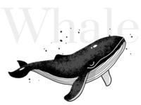 A whale illustration