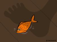 Dickman Goldfish