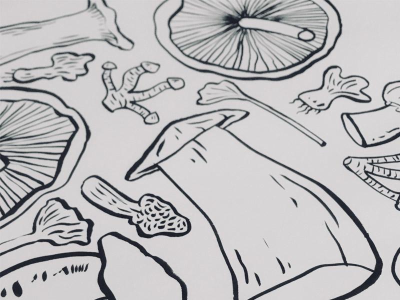 Fungidoodle valencia market mushrooms hand drawn illustrator illustration