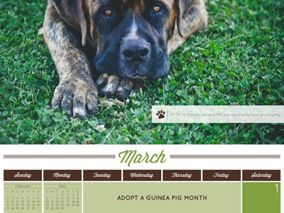 Humane Society of Souther Arizona 2014 Calendar - March Detail dogs calendar
