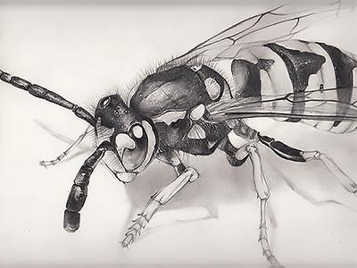 Wasp pencil natural draw wasp