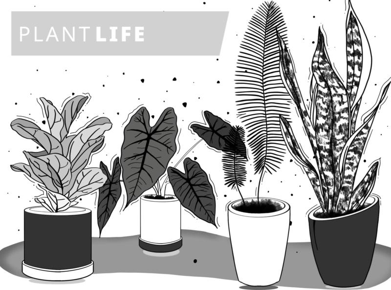 Plants - Procreate indoor lifestyle remote remote working draw monochrome ideas sketching shadow vector web design design sketchbook visual splash ipad procreate illustration sketch