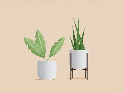 Plants planter leaf texture illustration snake plant plants