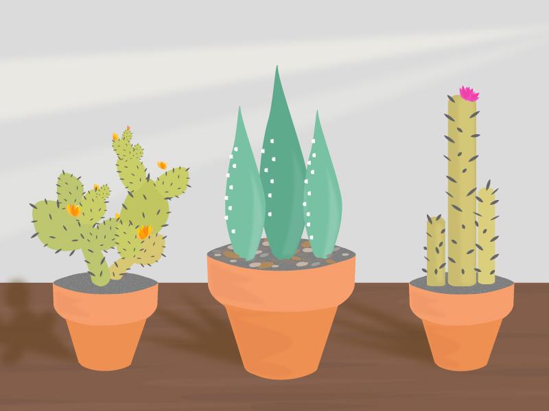 Cactus Makes Perfect window gardening plant practice succulent cactus
