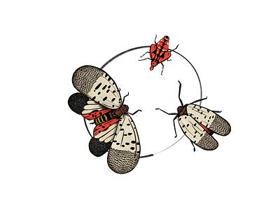 Invasive lanternfly invasive
