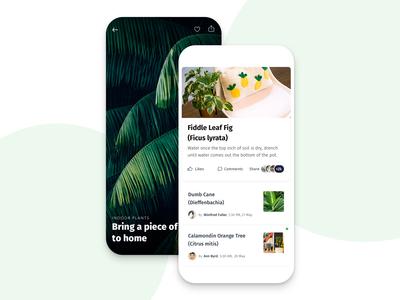 Introducing 2019's  Indoor Trendy Plants