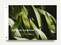 Leaves - Gallery