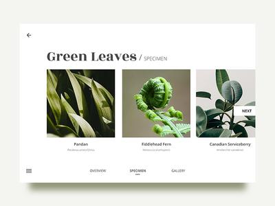 Leaves - Specimen