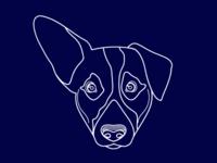 Finn the Australian Cattle Dog