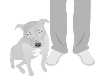 Tessa  gym dog pitbull gray illustrator illustration quick sketch
