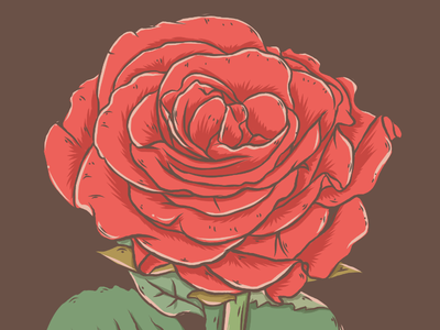 Rose rosa illustration rose
