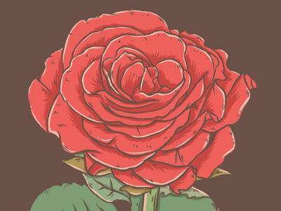 Rose rosa illustration rose