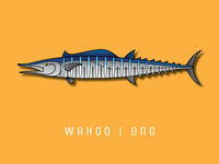 Wahoo | Ono  || Part 6 of my fish series.