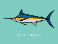 Blue Marlin || Part 7 of my fish series