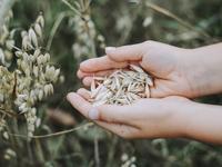 Harvest Fresh Bio Oats
