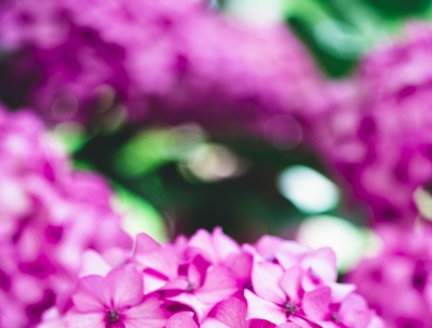 Luminous Pink Flower social media images cc0 photography freestock freephoto free freebie stockphoto free for commercial use download