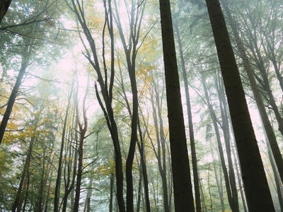 Foggy Forest photography freestock freephoto download free freebie stockphoto free for commercial use