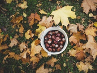 Collect Chestnuts