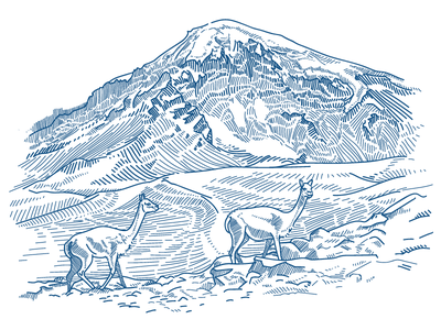 Sajama bolivia nature illustration mountain