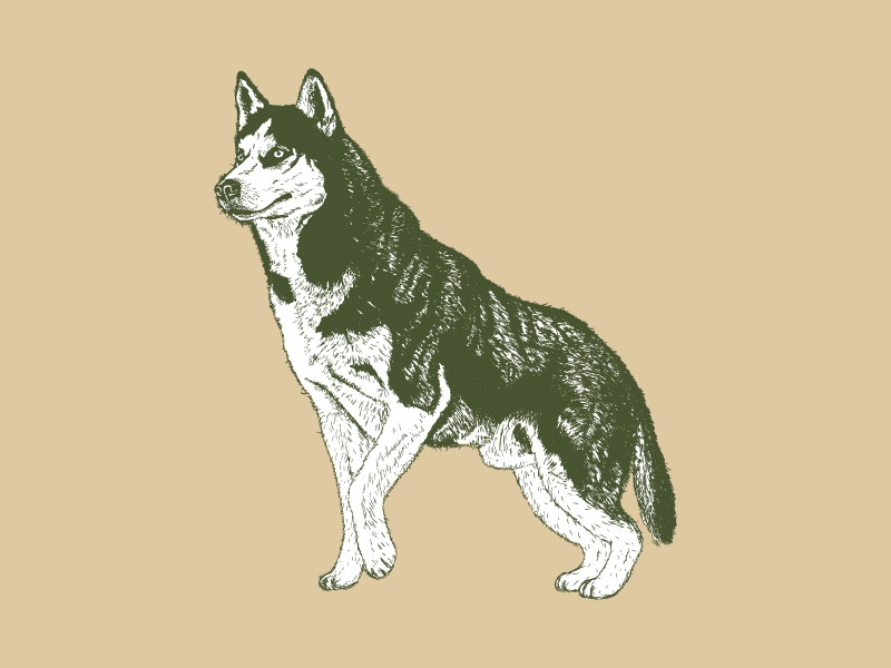 Doggo vector husky dog illustration wacom