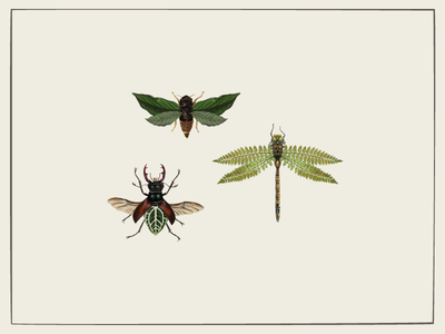 Bugs specimen cicada dragonfly beetle leaf nature diagram insects bugs