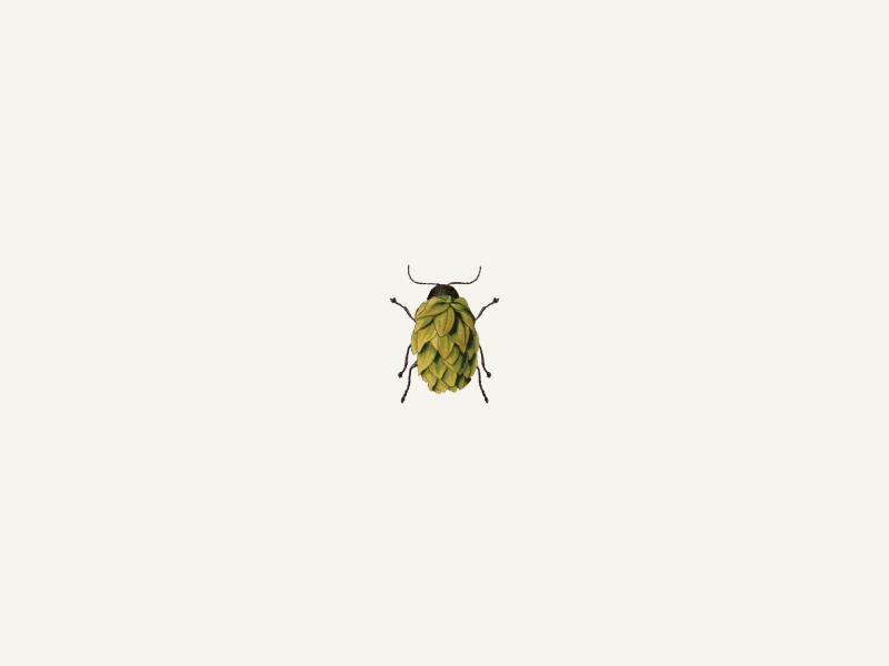 Hops Beetle