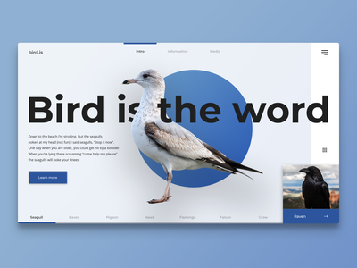 Bird information web app concept