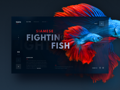 Siamese Fighting Fish typogaphy header landing page nature photograph ui  ux red abstract app ecommence shopping website vibrant coloful fish card product minimal simple web