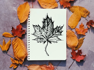 It's Fall! pen and ink drawing leaf leaves autumn fall
